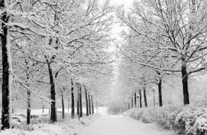 Snow covered path with snowy trees on either side